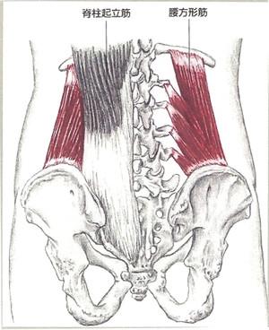 腰方形筋 に対する画像結果